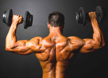 musculation dos